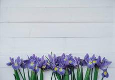 Flache Lagezusammensetzung mit Blumen irises auf weißem Hintergrund Zu Lizenzfreie Stockfotografie