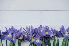 Flache Lagezusammensetzung mit Blumen irises auf weißem Hintergrund Zu Stockbilder