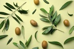Flache Lagezusammensetzung mit frischen Blättern, den Zweigen und Frucht der grünen Olive stockfoto