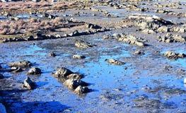 Flache Meerwasserküste Lizenzfreies Stockbild
