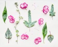 Flache mit Blumenlage mit rosa Blumen und verschiedenen grünen Blättern Blumen und Betriebszusammensetzung auf weißem Tabellenhin lizenzfreies stockbild