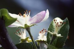 Flache Schärfentiefe Frühling ist gekommen Stockfotografie