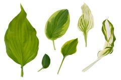 Flache Schicht Blätter von verschiedenen Anlagen wird auf einem weißen Hintergrund lokalisiert stockfoto