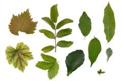 Flache Schicht Blätter von verschiedenen Anlagen wird auf einem weißen Hintergrund lokalisiert stockbilder