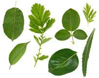 Flache Schicht Blätter von verschiedenen Anlagen wird auf einem weißen Hintergrund lokalisiert lizenzfreie stockfotografie
