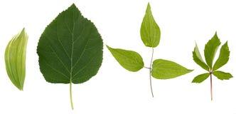 Flache Schicht Blätter von verschiedenen Anlagen wird auf einem weißen Hintergrund lokalisiert lizenzfreie stockbilder
