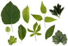 Flache Schicht Blätter von verschiedenen Anlagen wird auf einem weißen Hintergrund lokalisiert stockbild