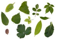 Flache Schicht Blätter von verschiedenen Anlagen wird auf einem weißen Hintergrund lokalisiert stockfotografie