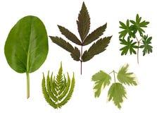 Flache Schicht Blätter von verschiedenen Anlagen wird auf einem weißen Hintergrund lokalisiert lizenzfreies stockfoto