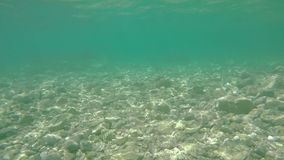 Flacher felsiger Meeresgrund stock video