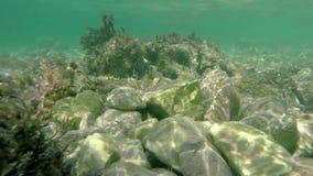 Flacher felsiger Meeresgrund mit Fischen stock video footage