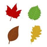 Flacher Herbstlaub der Karikatur auf weißem Hintergrund Vektor illustrat Lizenzfreies Stockbild