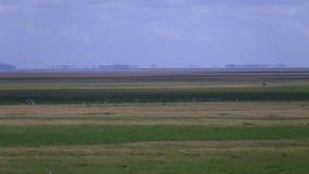Flacher Landschaftszoom heraus stock video