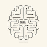 Flacher linearer Infographic-Bildungs-Entwurf Brain Concept Vektor Stockfotografie