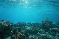 Flacher Meeresgrund mit Korallenriff und Fischen Stockbild