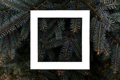 Flacher Plan des dunklen schwermütigen Kiefermusters mit einem kreativen Konzept des Entwurfes des Rahmens des weißen Quadrats f lizenzfreie stockfotografie