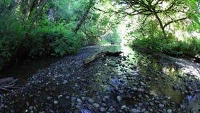 Flacher Strom im Rotholz-Nationalpark, Kalifornien stock video