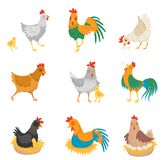 Flacher Vektor stellte mit Hühnern, kleinen Küken und Hähnen ein Bauernhofvögel Einheimisches Geflügel Elemente für die Werbung d stock abbildung