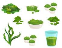 Flacher Vektorsatz spirulina Meerespflanze Natürliche Ergänzung Gefrorene Algen Schüssel Pulver, Glas von Smoothie, kleine Kuchen stock abbildung