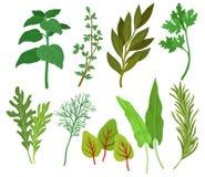 Flacher Vektorsatz verschiedene Kräuter Duftpflanzen benutzt in kulinarischem und in der Medizin Bestandteile für würzende Teller vektor abbildung