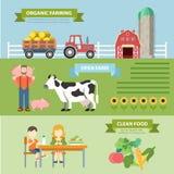 Flaches infographics Vektor des organischen natürlichen Bauernhofes: Landwirtschaft von eco Lebensmittel Lizenzfreies Stockfoto