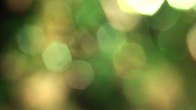 Flackernde Unschärfe des Sonnenscheins auf grünem Hintergrund stock footage