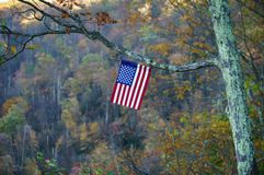Flag. American flag hanging on the tree branch Royalty Free Stock Images