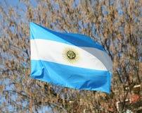 Flag of Argentina flying Royalty Free Stock Photo