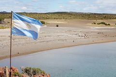 Flag of Argentina at Punta Tombo in the Atlantic Ocean, Patagonia, Argentina. Flag of Argentina at Punta Tombo, the peninsula into the Atlantic Ocean, south of Stock Images