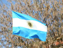 flag of Argentina waving outdoors with trees on background Stock Images