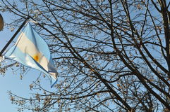 Flag of Argentine Stock Photos