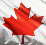 Flag of Canada. Red maple leaf on white background Royalty Free Stock Photos