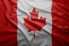 Flag of Canada. Waving colorful national Canadian flag Royalty Free Stock Photography
