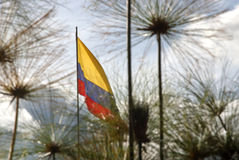 Flag. Colombia flag hoisted in a park Royalty Free Stock Photo