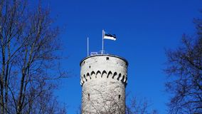 Flag of Estonia waving on big tower. Flag of Estonia waving on tall historic tower made of massive bricks in Tallinn, Estonia. Blue cloudless sky and trees stock video