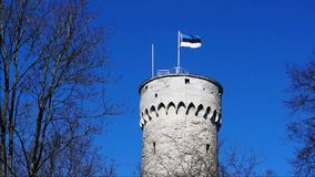 Flag of Estonia waving on tall historic tower made of massive bricks in Tallinn, Estonia. Blue cloudless sky and trees surrounding stock video