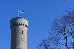 Flag of Estonia waving on top of massive old historic tower in Tallinn (Estonia) with a flagpole. Blue cloudless sky and trees surrounding the scene stock photo