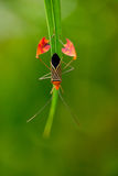 Flag Footed Bug stock images
