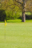 Flag on the golf field. Flag and the golf field and forest on background Royalty Free Stock Images