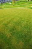 Flag on golf field. Green plant background, young grass Stock Photos