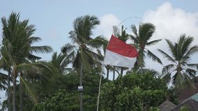 The flag of Indonesia develops on wind against the background of palm trees on the tropical beach.  stock video