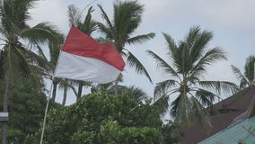 The flag of Indonesia develops on wind against the background of palm trees on the tropical beach stock video
