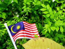 The flag of Malaysia on a natural background. Stock Photography