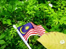 The flag of Malaysia on a natural background. Stock Photo