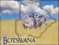 Flag Map of Botswana on which is a picture of a zebras. There is the text of Botswana. There is It is national african background. There is golden grass and stock photos