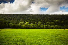 Flag of nature. Hills, forest and lawn with sky above Royalty Free Stock Images