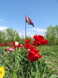 Flag of the Right Sector fluttering in the wind among a park in Sumy, Ukraine. Red and black flag on flagpole on the background of. A flower bed with colorful royalty free stock photos