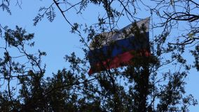 Flag of Russia. The flag of Russia develops through the trees. Flag of Russia against the sky, tree branches in the foreground stock video footage