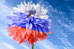 Flag of Russia. Flower of dahlia as flag of Russia on background of blue sky Stock Photos
