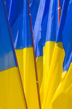 Flag of Ukraine. Bunch of flags. Royalty Free Stock Images